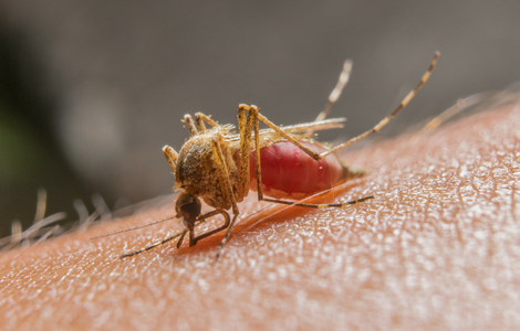 what-is-west-nile-virus.png