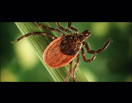 Mosquito.Buzz Tick Control